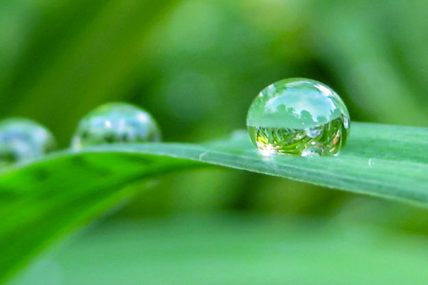 Water droplets on a blade of grass © Heather Armata