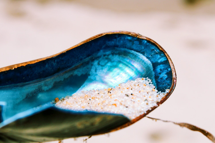Mussel shell © Samantha Buckley