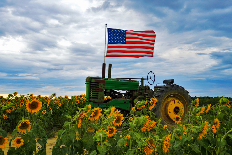 The American flag flies over a green tractor in a field of sunflowers