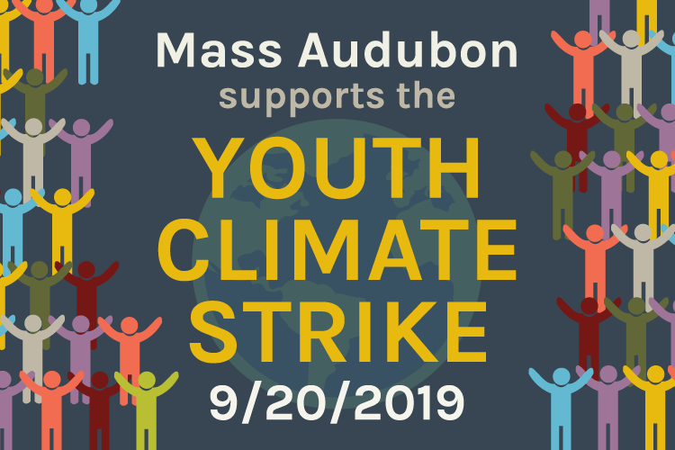 Mass Audubon supports the Youth Climate Strike
