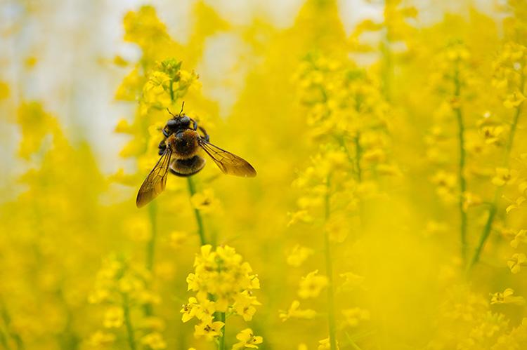 Bee copyright Simi Rabinowitz