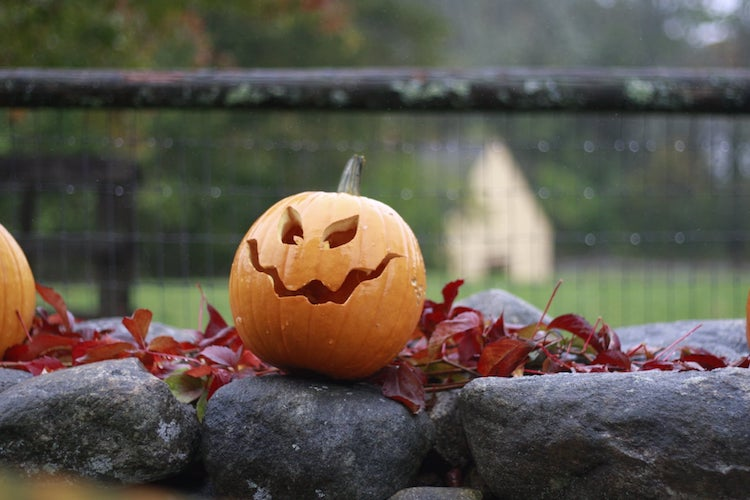 Jack o Lantern from Tales of the Night at Drumlin Farm