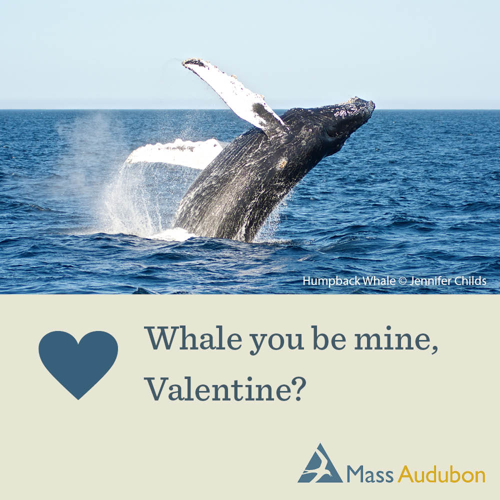 Whale you be mine, Valentine?