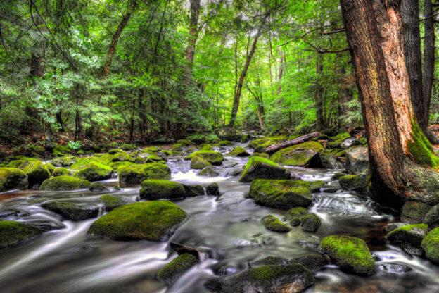 Fall River in Otis, MA © Geoffrey Coelho