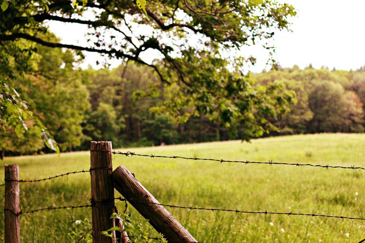 A farm meadow in Acton, MA © Sophia Li