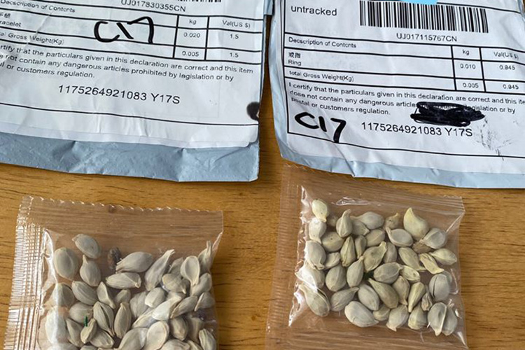 Example of unsolicited seeds via Washington State Department of Agriculture