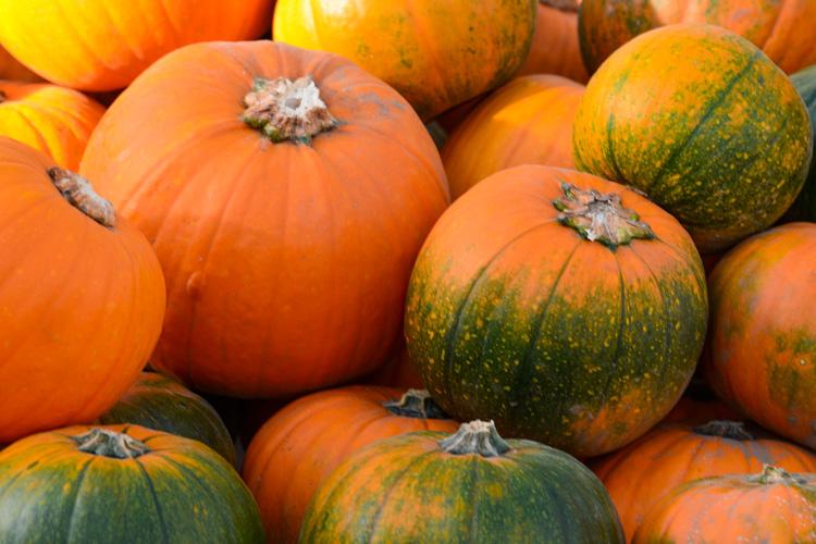 Pumpkins © Beth Del Bono