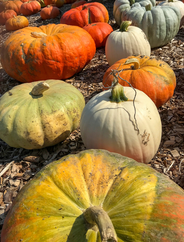 Pumpkins at a farm stand in Methuen, MA © Nancy Rich
