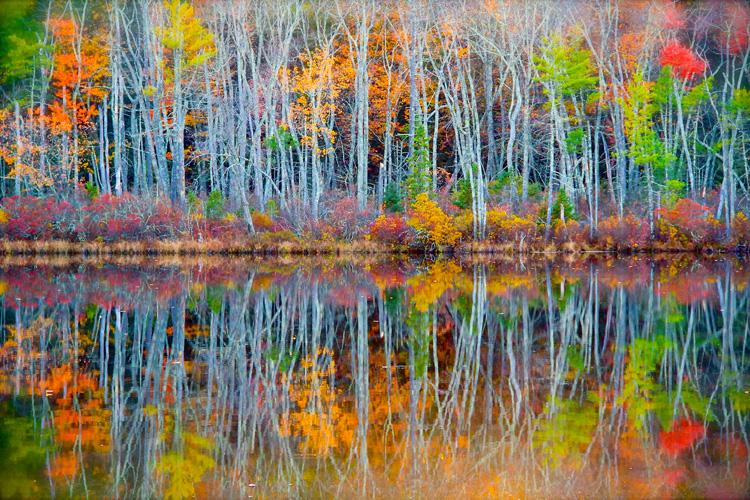 Fall Color at Bottomless Pond in Sudbury, MA © Bryan Gammons