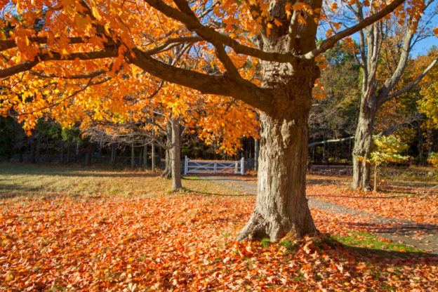 Fall Leaves © Ken Conway