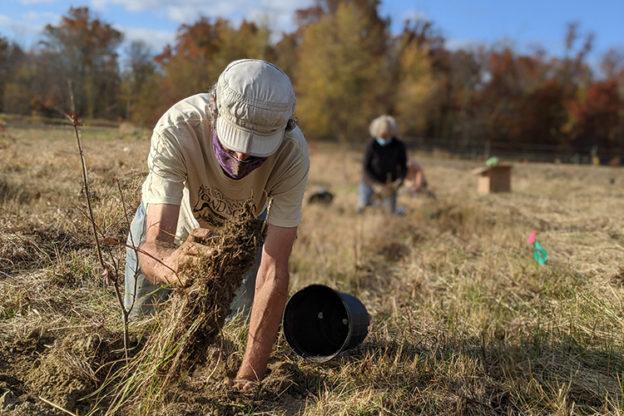 volunteer planting a tree at Arcadia