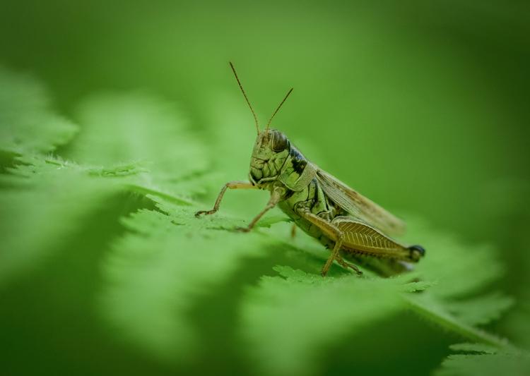 Grasshopper, Winner: Other Wildlife, Under 18 © Deyan Kassev