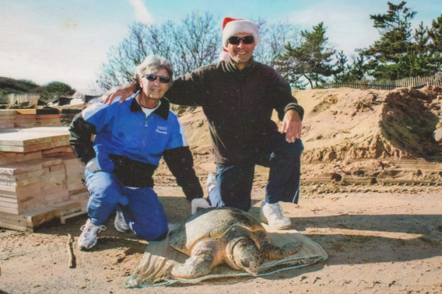 Barbara and her husband Nick with a cold-stunned Loggerhead sea turtle