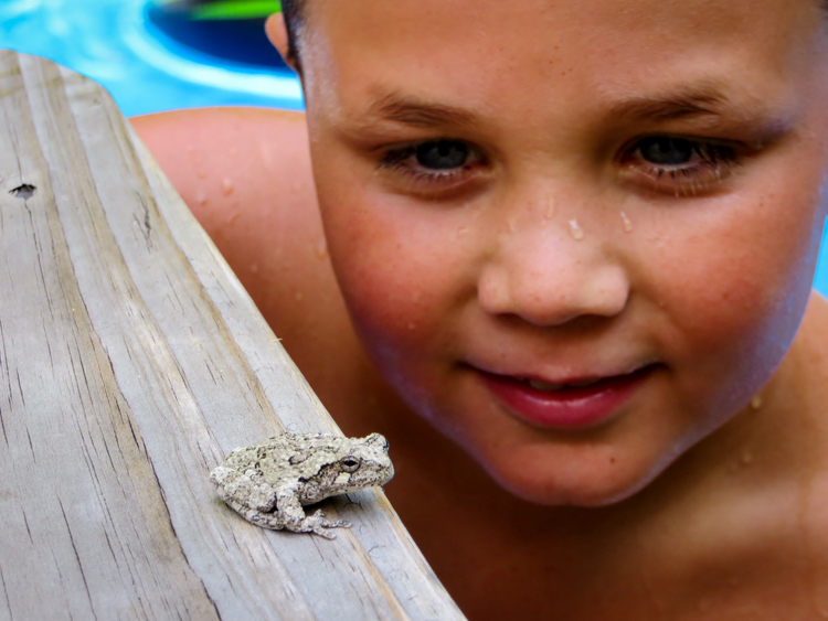 Close Encounter with a Gray Treefrog © Melissa Shelley