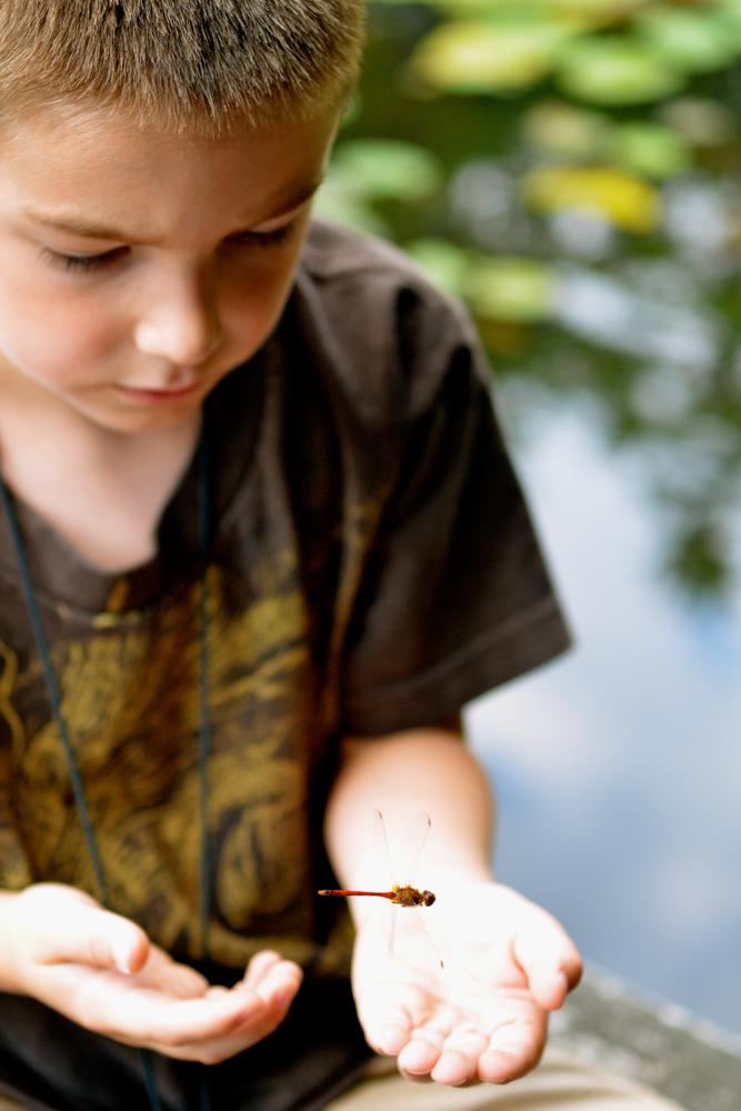 Dragonfly Friend © Michelle Lo Conte
