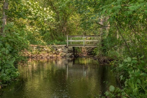 Stony Brook Wildlife Sanctuary © Lorie Brownell