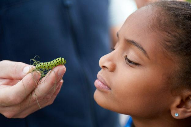 Staring Contest with a Black Swallowtail Caterpillar © Mass Audubon