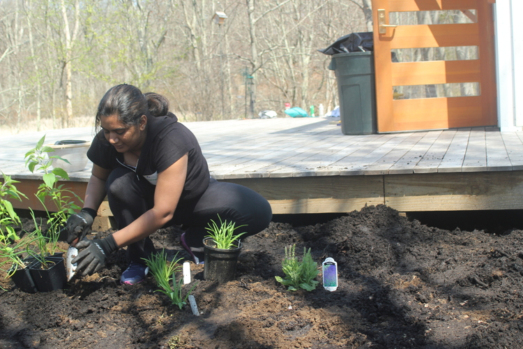 A volunteer planting a plant in the garden at a wildlife sanctuary.