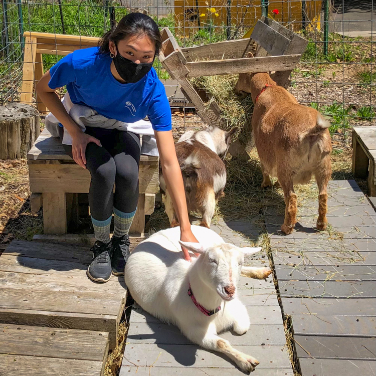 Volunteer Lily with the Habitat Goats