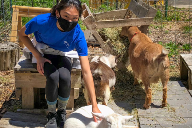 Lily with goats
