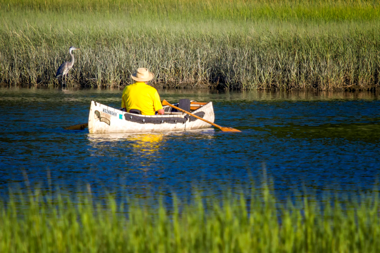 Canoeing with a Great Blue Heron nearby © Rosemary Sampson
