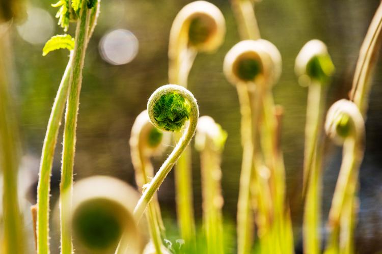 Ferns © Simi Rabinowitz