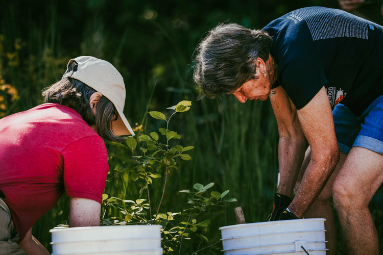 Volunteers Jan Spence (right) and Lisa Meeks plant the final shrub—a winterberry—at a ceremony celebrating the completion of the Tidmarsh restoration project.