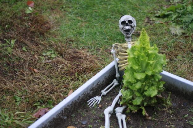 Skeleton in the Garden